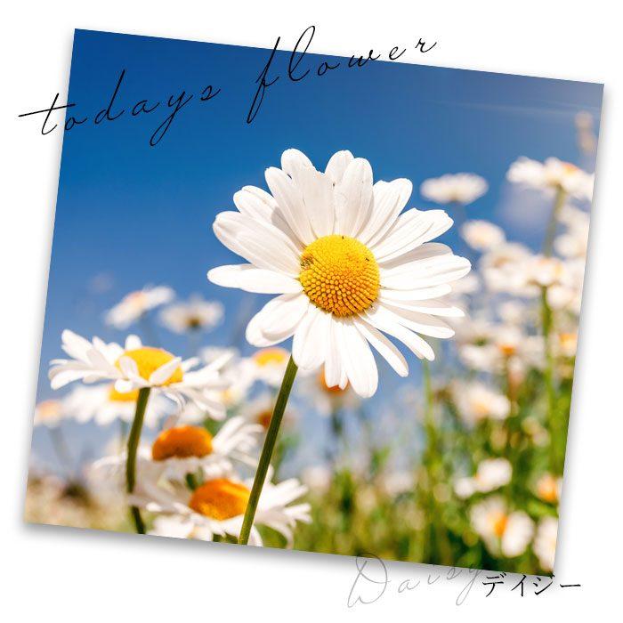 """【スタッフコラム】花言葉は""""美しい""""着るだけで笑顔溢れるフラワーアイテムの世界へようこそ"""