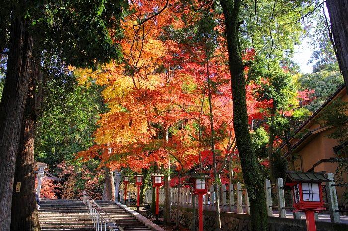 【京都まにあ】紅葉の季節に訪れたい、スタッフ一押しの紅葉スポットと京都の町が一望できる古民家カフェ