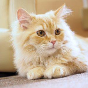 【一押しオススメアイテム】ねずみ年の2020年にはさりげない猫モチーフを取り入れた遊び心あるワントーンコーデ