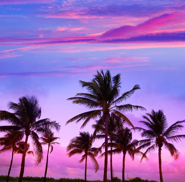 【世界のファッション】ビーチリゾートの最高峰マイアミ!アメリカ屈指のリゾート地で始まった何もかもが新鮮な生活とは・・・?