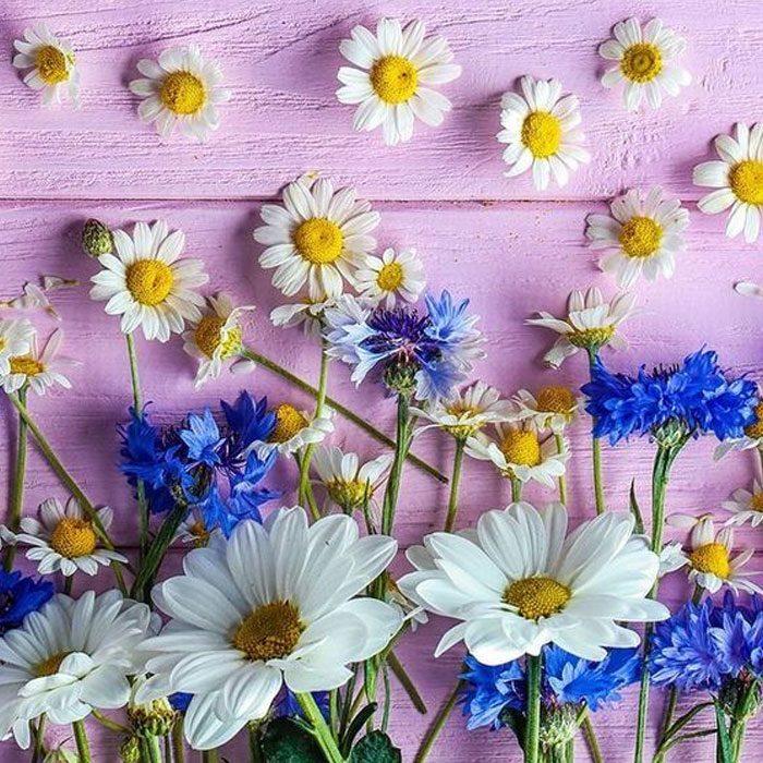 【一押しオススメアイテム】心躍る♪新しい季節へ!大人のお花柄刺繍&レース 5アイテムPick Up!!
