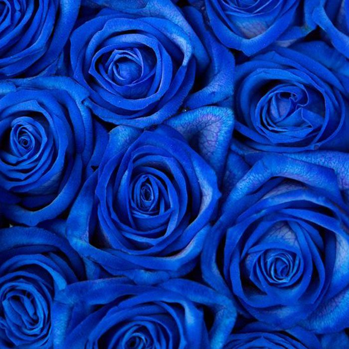 """【知って得する!カラー講座】大注目!!流行の""""クラシックブルー""""アイテムを夏らしく着こなす"""