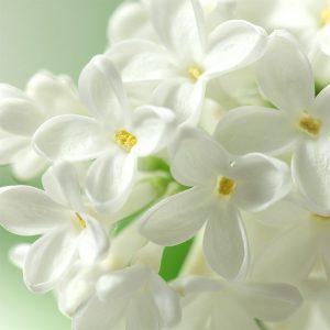 【一押しオススメアイテム】春のおしゃれは白でクリーンに着映える!素材別におすすめポイントもご紹介♡