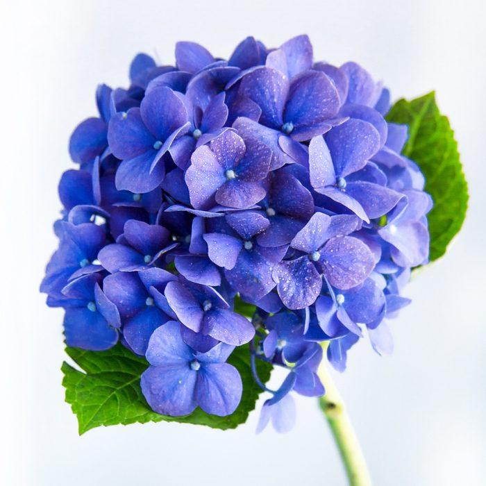 【知って得する!カラー講座】梅雨コーデにおすすめ! 雨の日をおしゃれに彩る、さわやかブルーのお洋服